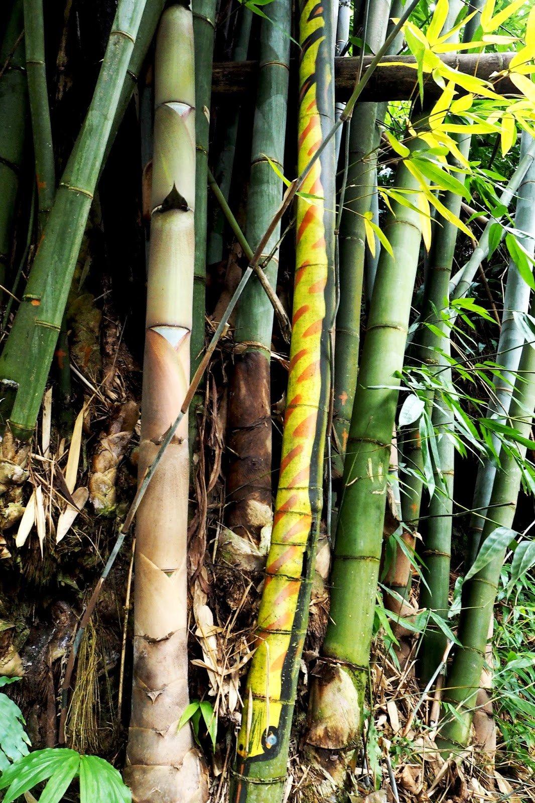 Flore bambous