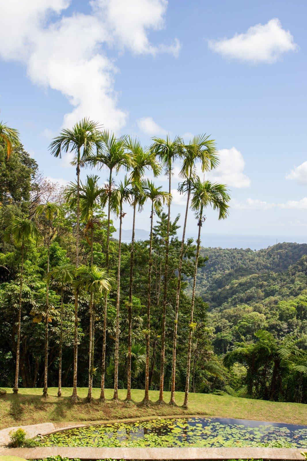 Jardin Balata Nord de la Martinique
