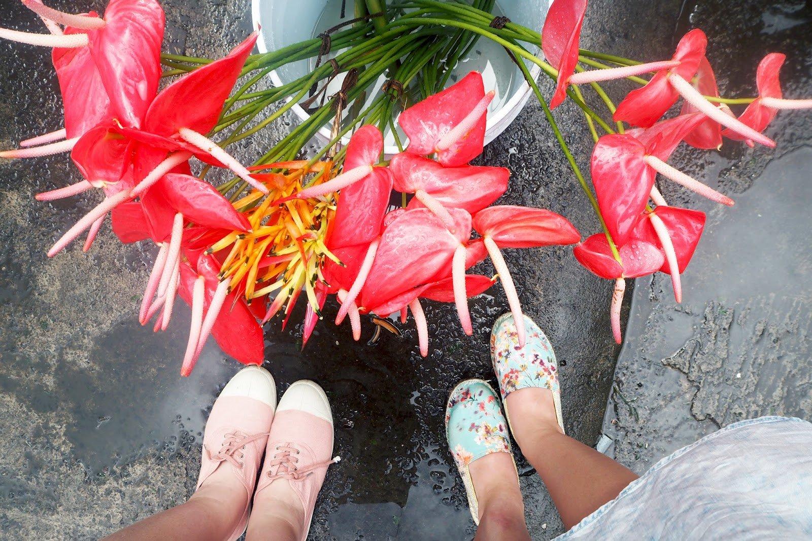 fleurs antilles