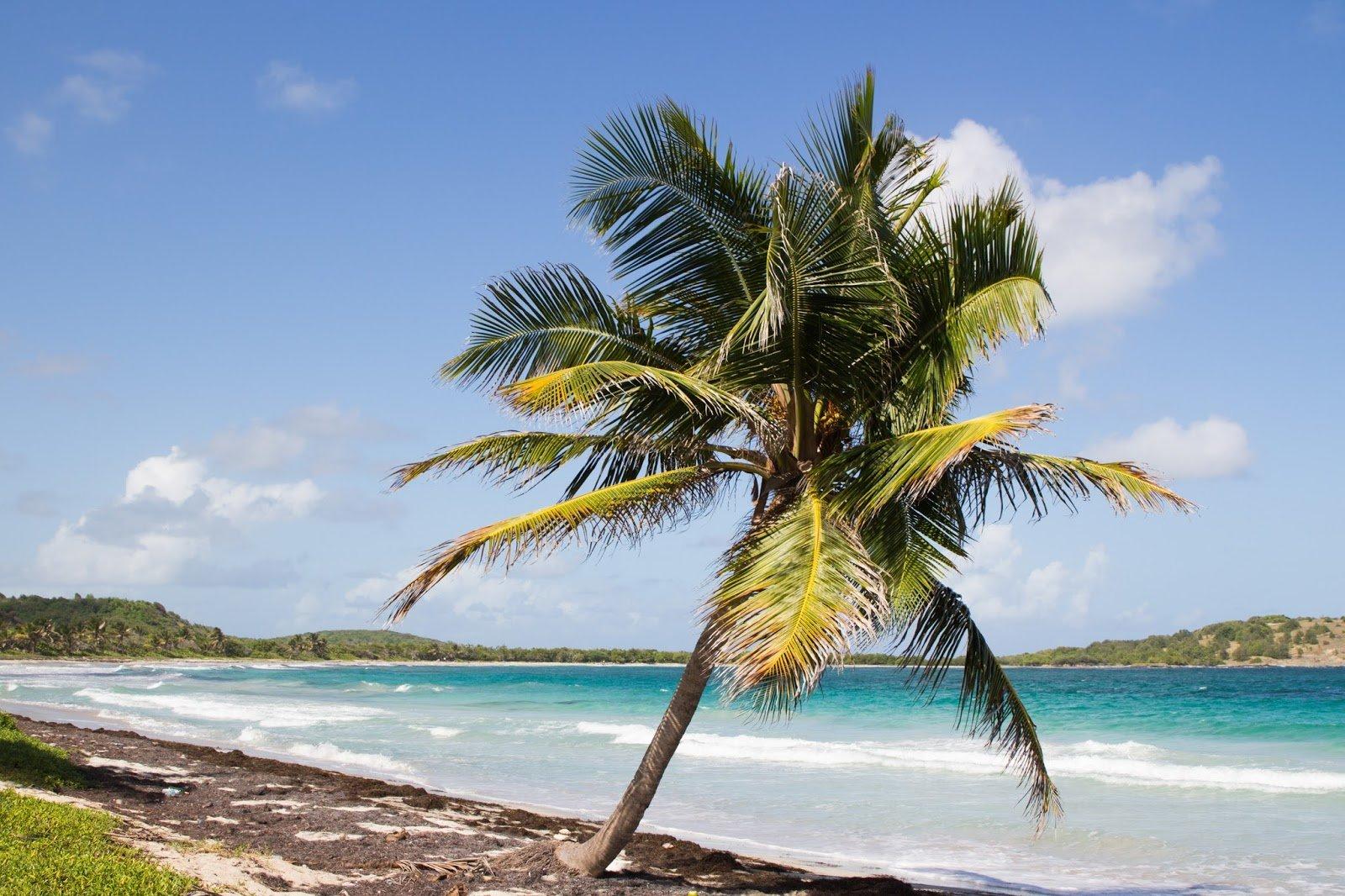 Martinique belle plage