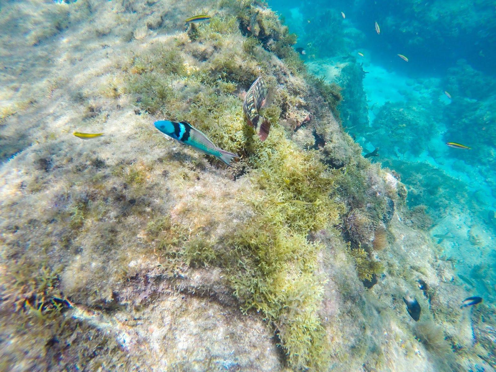 Martinique fond marin