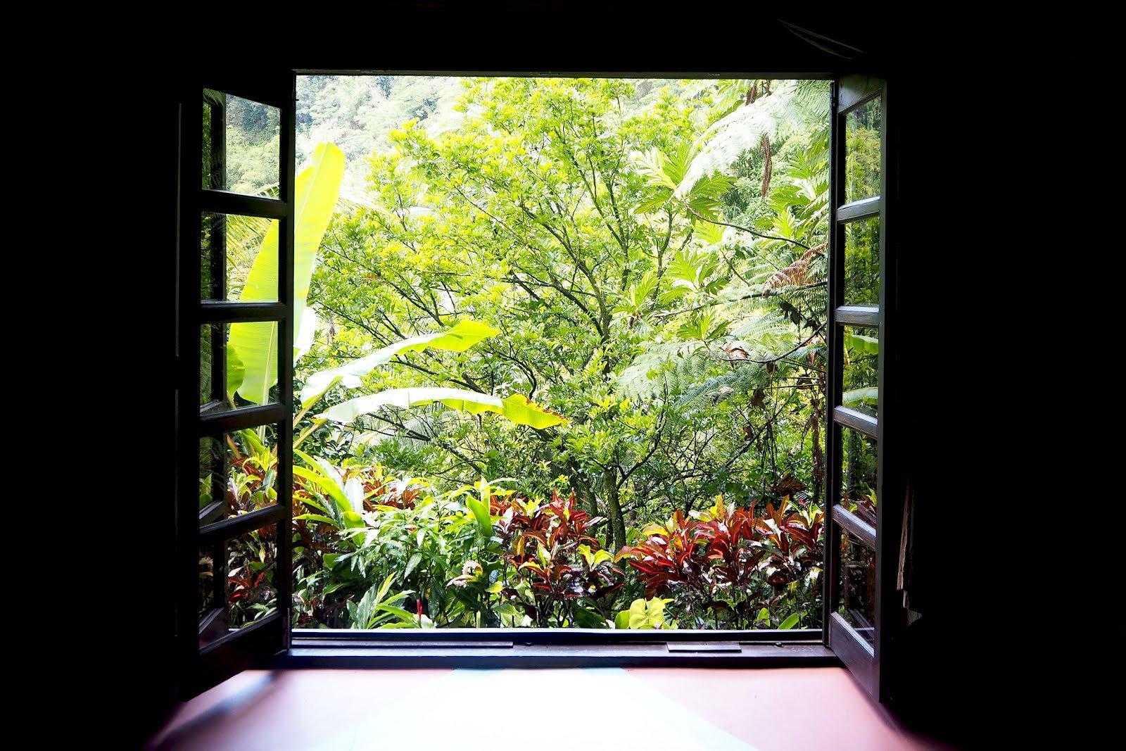Dominique végétation