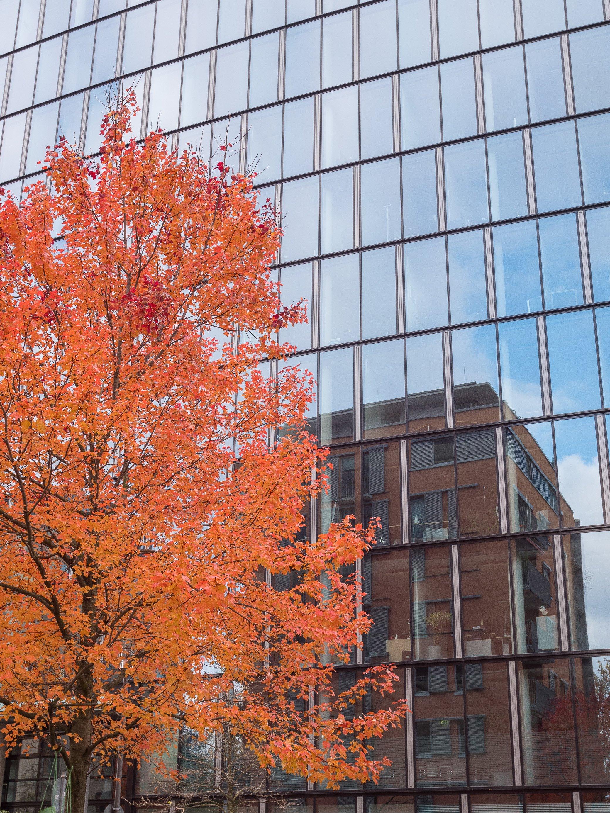 visiter francfort en automne