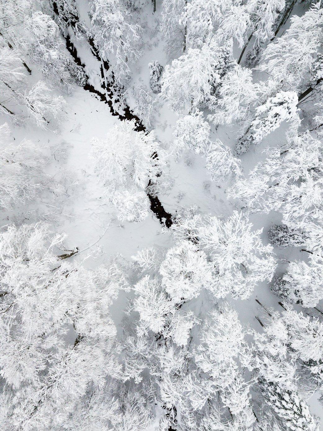 Sapins sous la neige Pyrénées