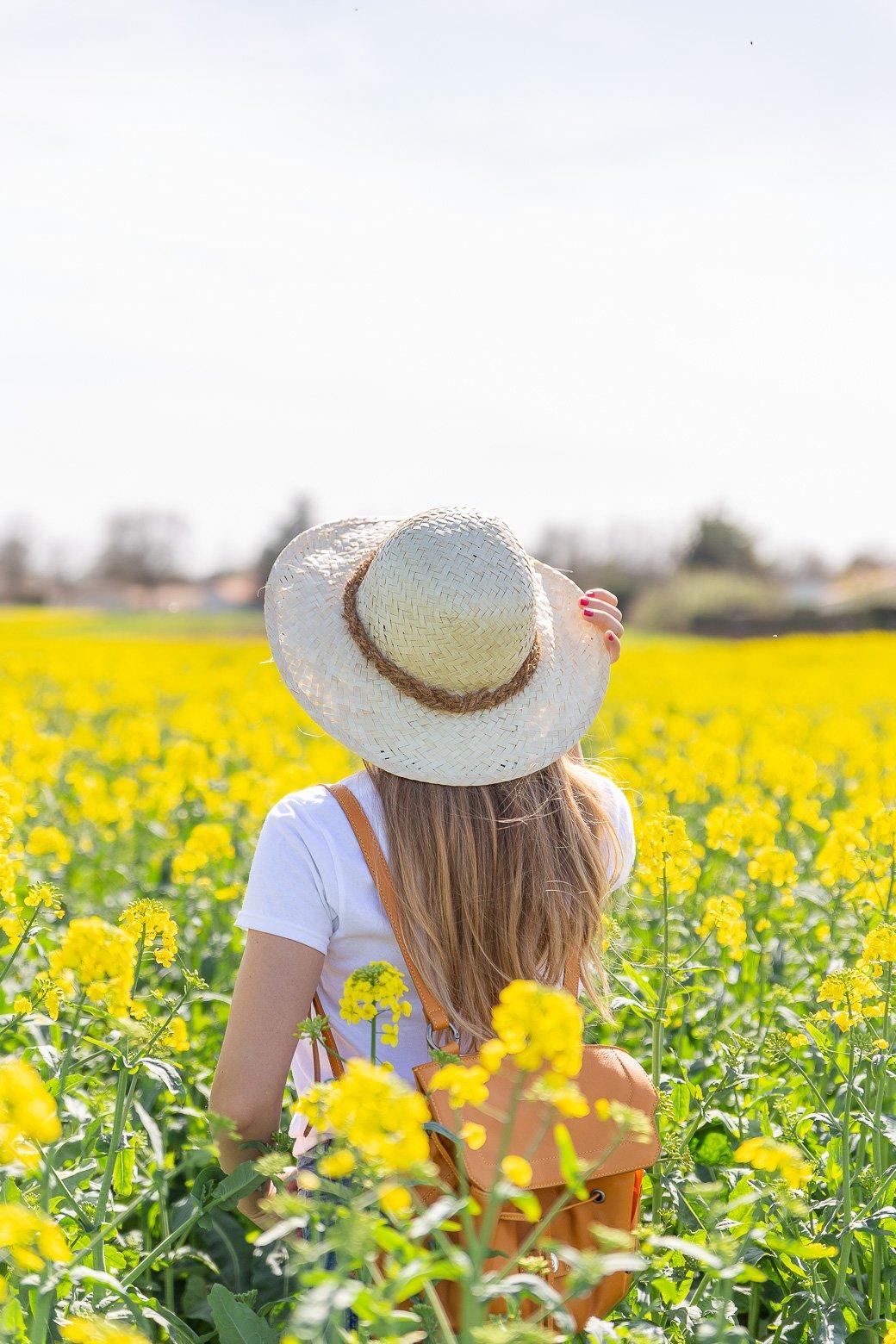 champ fleurs jaune