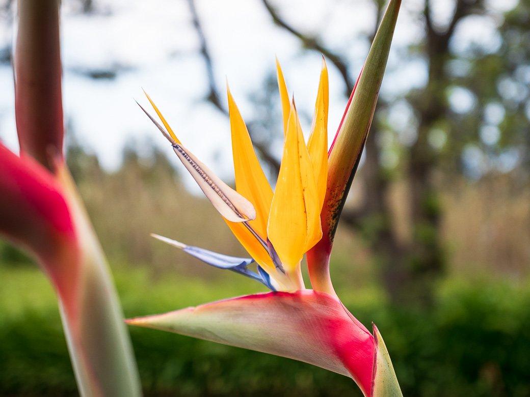 Madère île fleurs