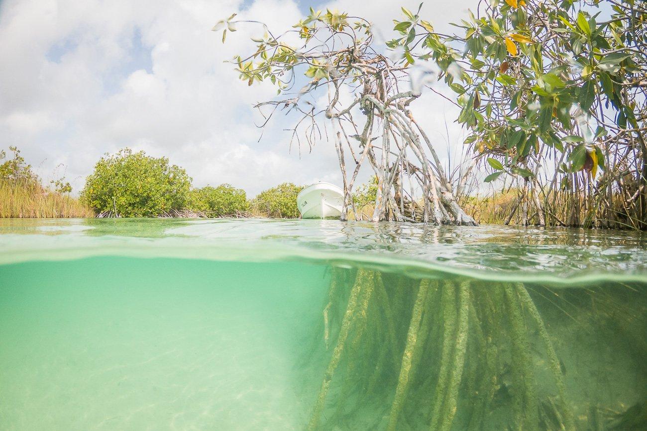 mangrove sian ka'an