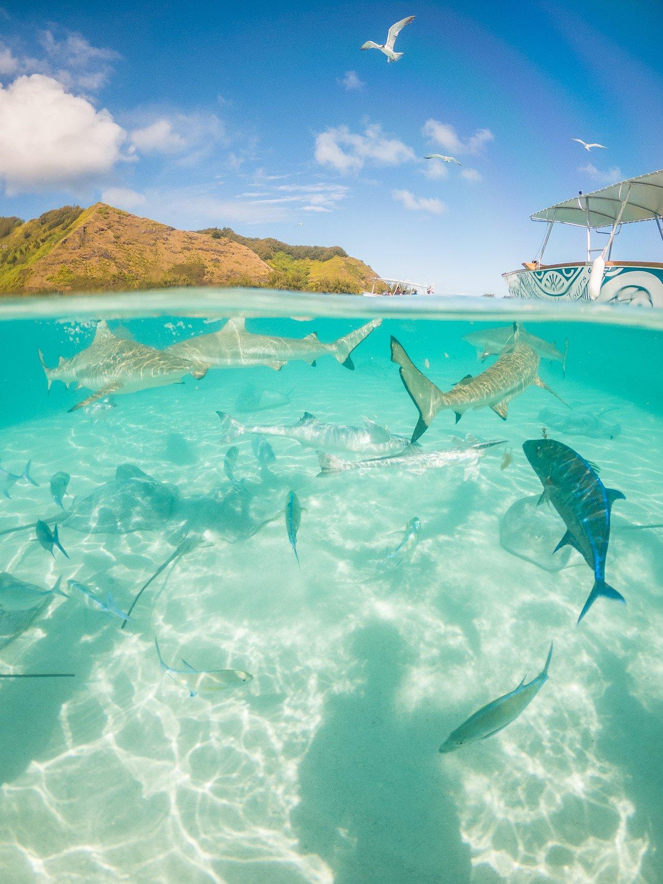 photo gopro requins